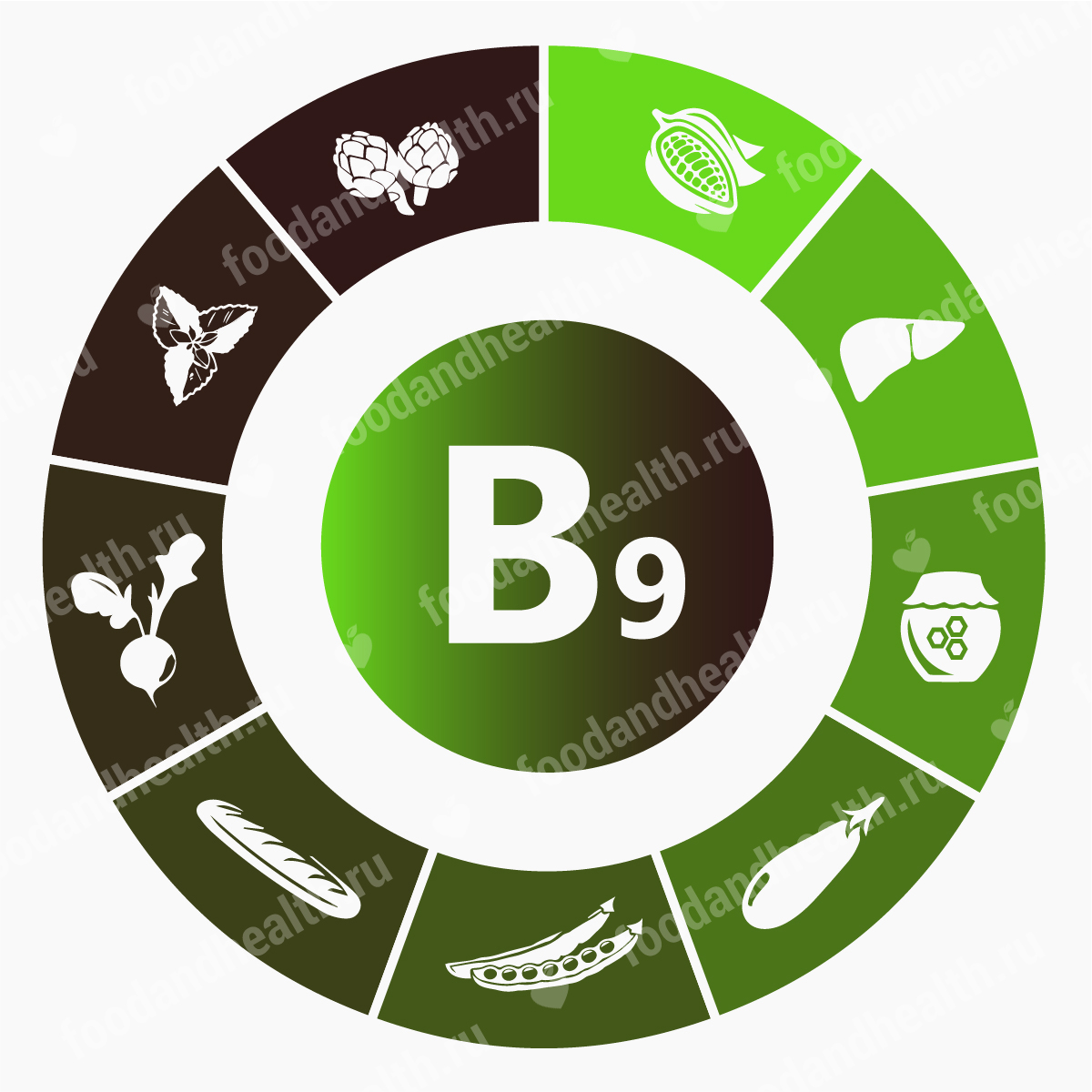 Вс о фолиевой кислоте характеристика витамина b9