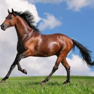 Биотин для лошадей