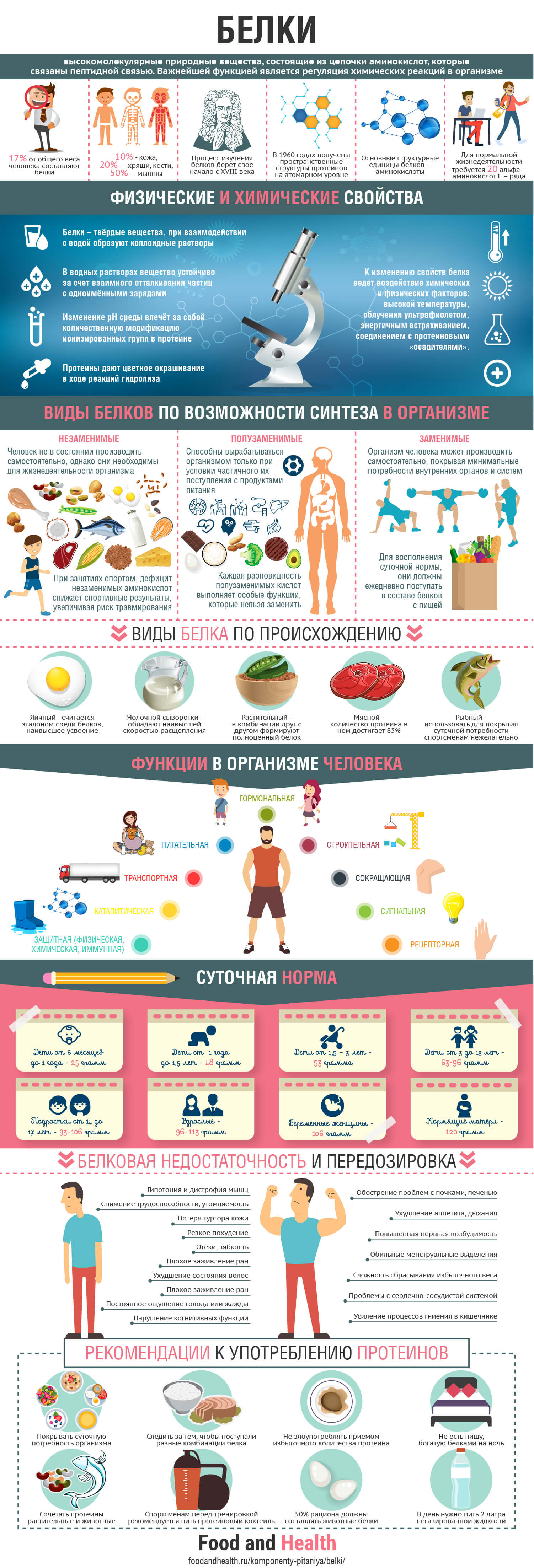 Белки: инфографика