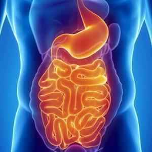 Глутамин да пищеварительная система