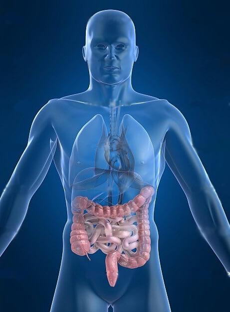 киви снижает уровень холестерина