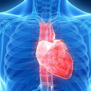 Польза карнитина для сердца