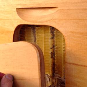 Щавелевая кислота в пчеловодстве