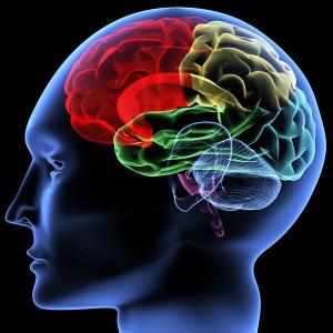 Тирозин и работа мозга