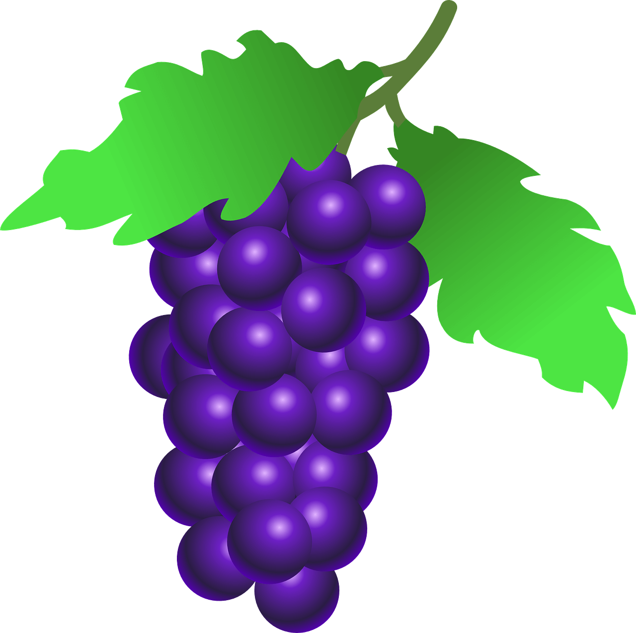 Кислоты винограда свойства разновидности