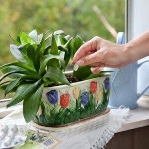 Дрожжи для растений