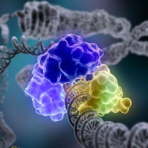 Энзимы как катализатор