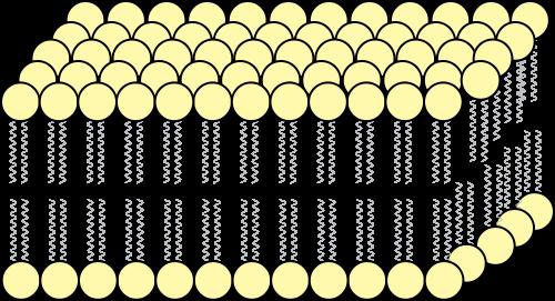 Фосфатидилхолин (лецитин)