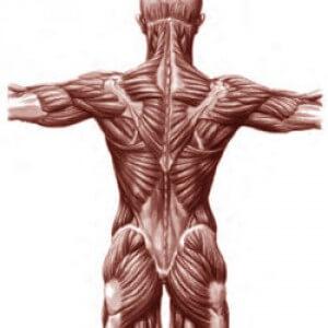 Функции гидроксипролина