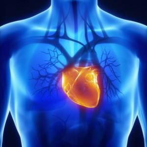 Глюкоза для работы сердца