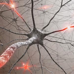 Клетки мозга и галактоза