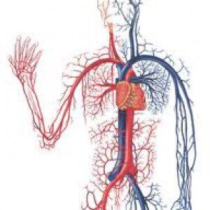 МНЖК для сердечно-сосудистой системы