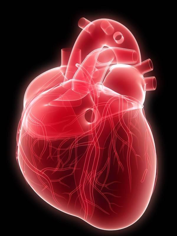 Польза клетчатки для сердца