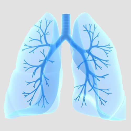 Польза насыщенных кислот для организма