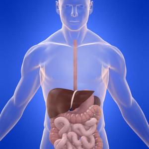 Роль галактозы в пищеварении