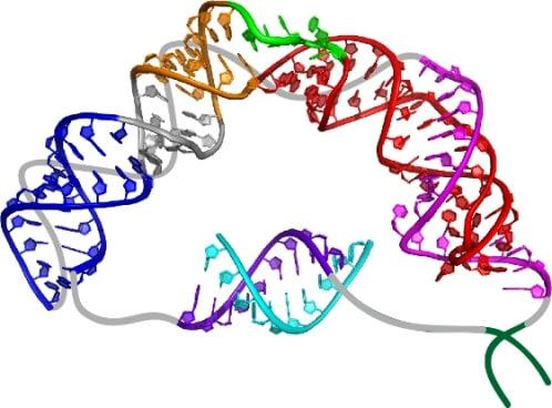Структура энзимов