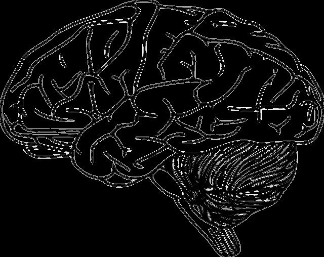 Зоостерины для мозга