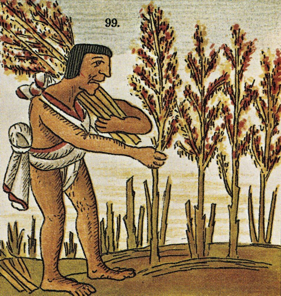 Амарант в культуре ацтеков