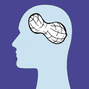 Польза арахиса для мозга