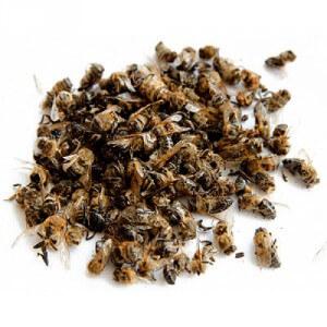 Рецепты из пчелиного подмора