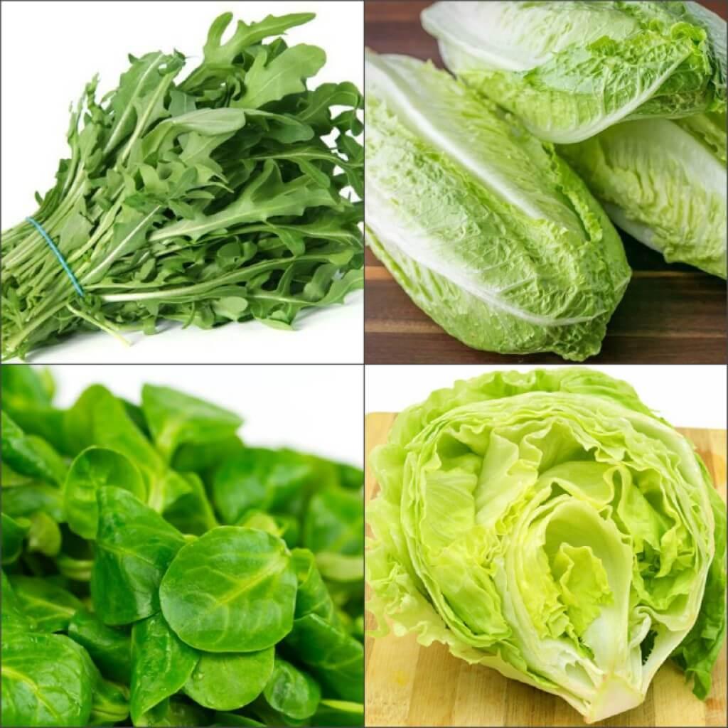 Все виды салатов зеленых