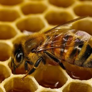 Что такое мед