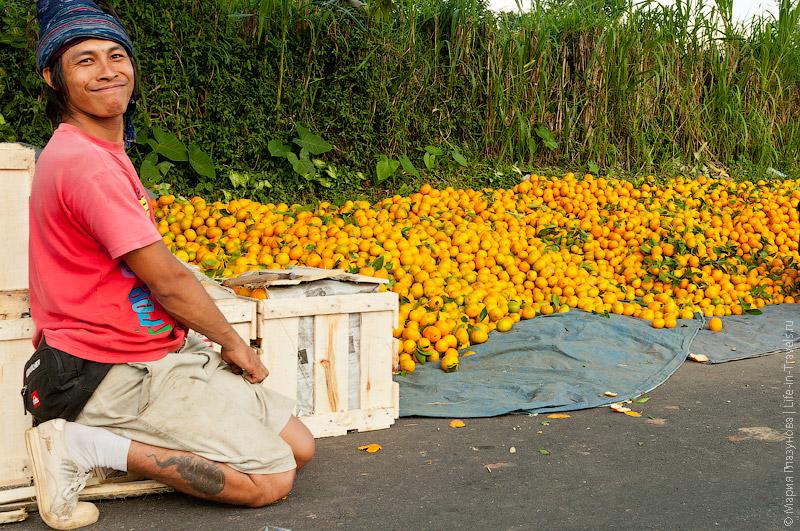 Отбор мандаринов в Индии