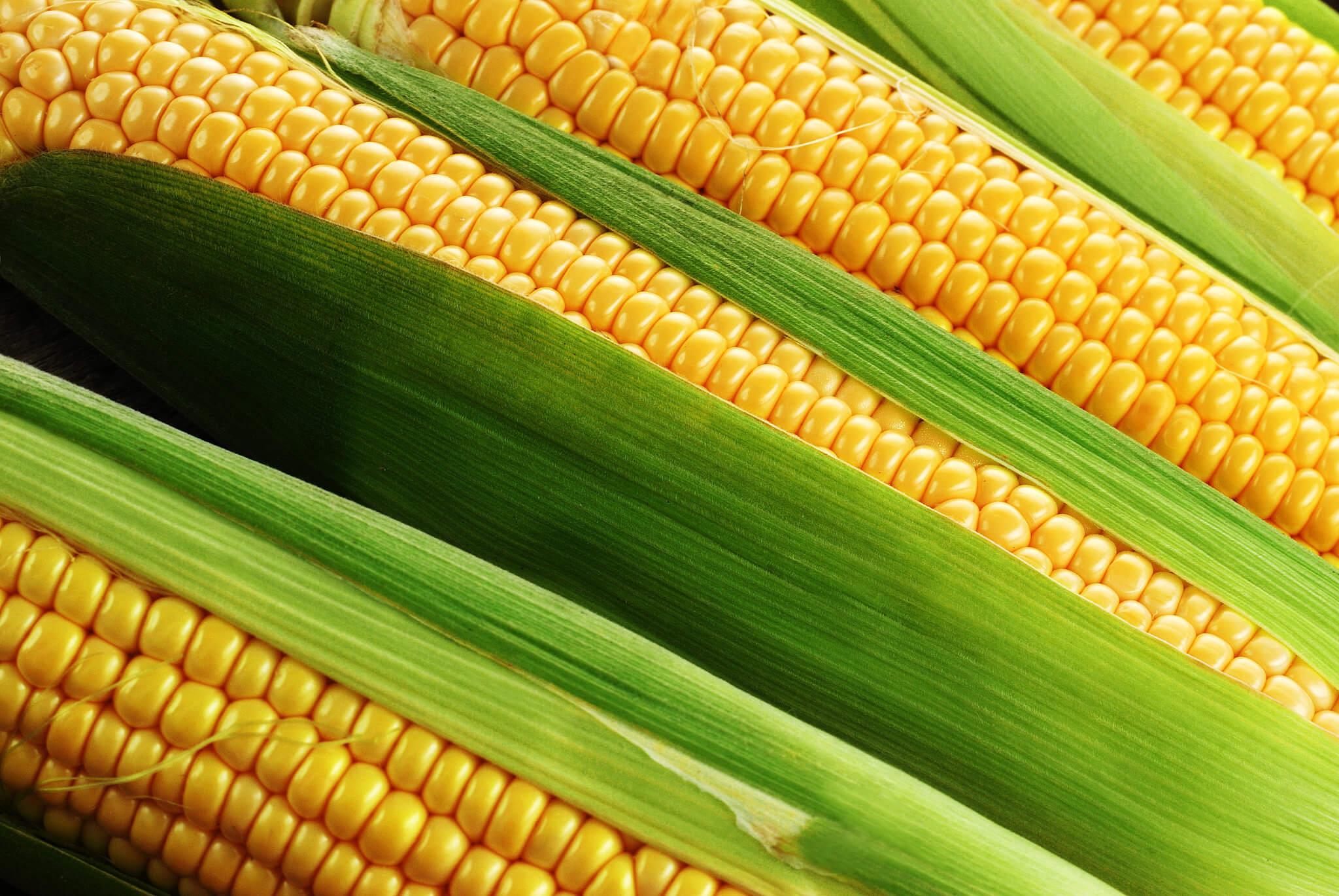 какую кукурузу подобрать для варки