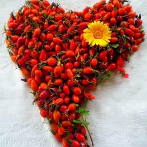 Шиповник для сердца