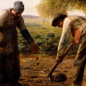 История картошки
