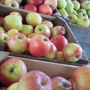 Как правильно выбрать и хранить яблоки