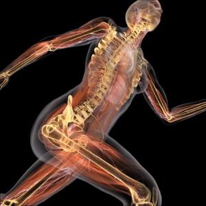 Кости - каркас организма