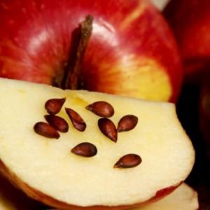 Потенциальная опасность яблок