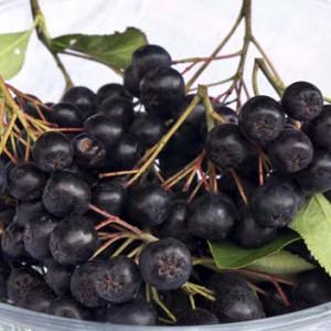 Чем еще полезна черноплодная рябина