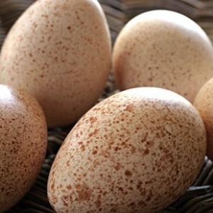 Индюшиные яйца полезны для здоровья
