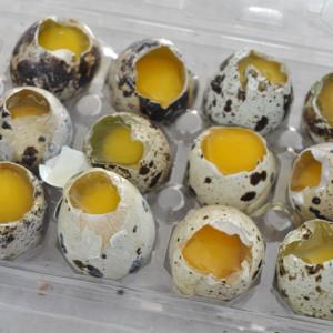 Кому полезны перепелиные яйца
