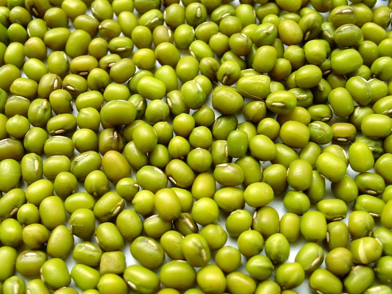 Маш крупа-польза и вред для мужчин, как проращивать проростки фасоли, ростки гороха и бобы для здоровья организма, возможные противопоказания