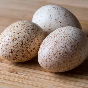 Описание и питательная ценность индюшиных яиц