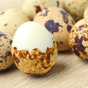 Перепелиные яйца не содержат сальмонеллу