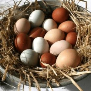 Питательные характеристики яиц цесарок