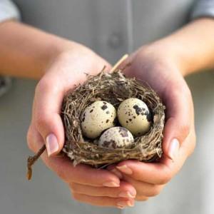 Преимущества перепелиных яиц для здоровья