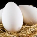 Яйцо гусиное