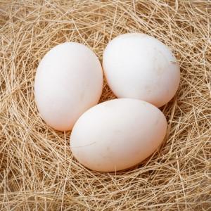 Полезные свойства утиных яиц