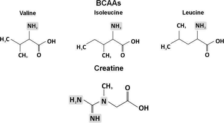 Химическая структура аминокислоты с разветвленной цепью