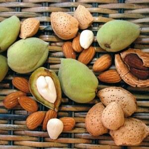 Плоды сладкого миндаля
