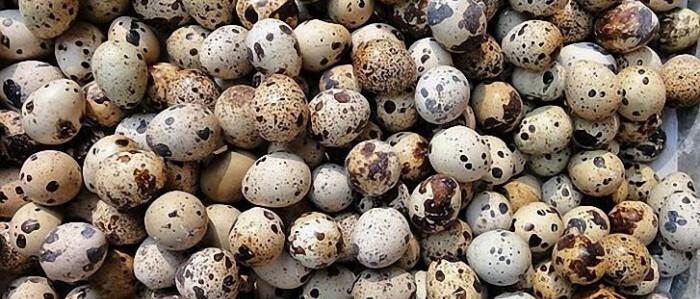 Яйца куропатки