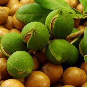 Австралийские орехи