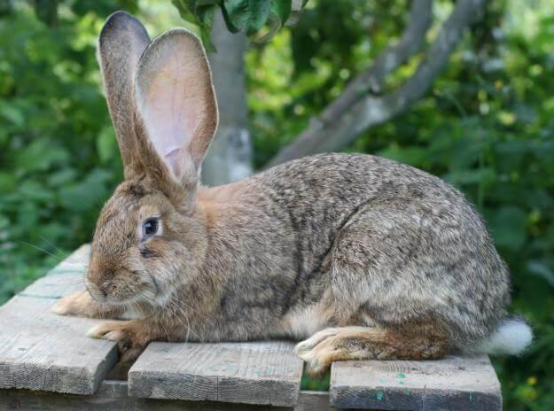 Польза и вред мяса кролика для организма