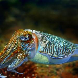 Морской хамелеон