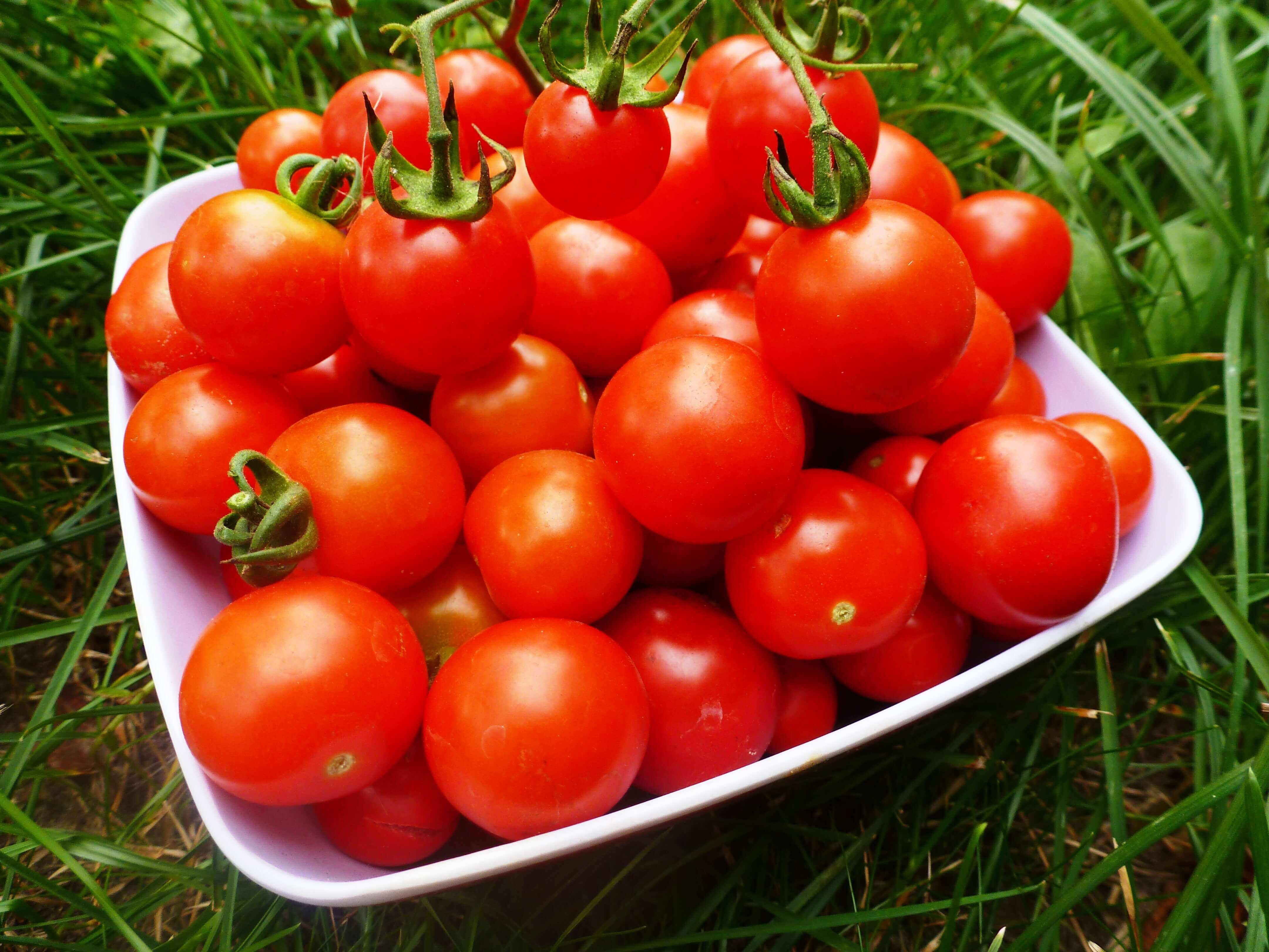 Зеленые помидоры: польза и вред